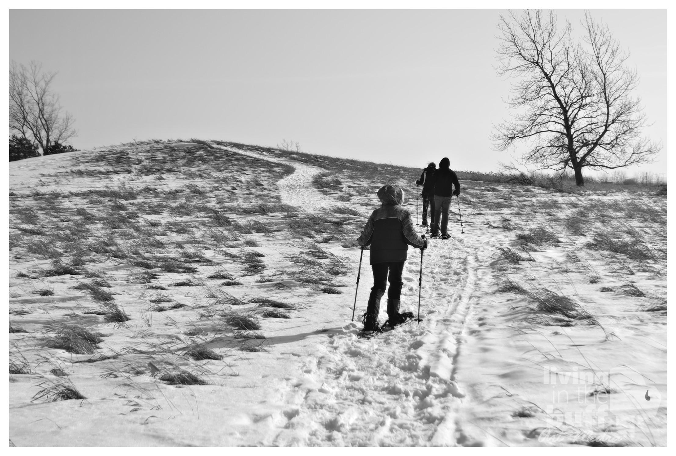 Snowshoeing at Tifft Nature Preserve