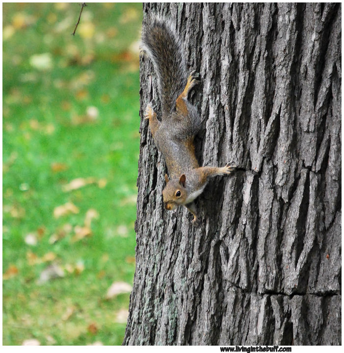 squirrels � living in the buff
